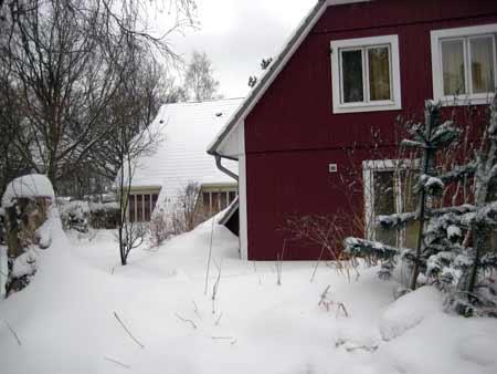 Kiekoever-im-Schnee
