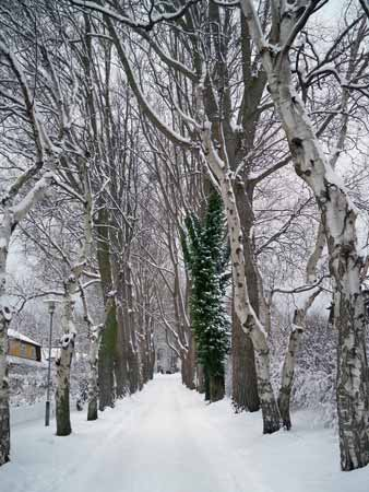 winterallee